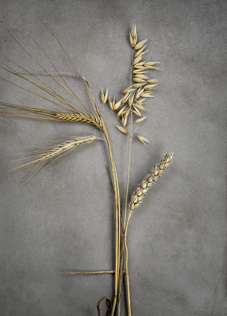 Four Grains 50x70 299kr