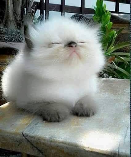 Sweet, fluffy kitten.