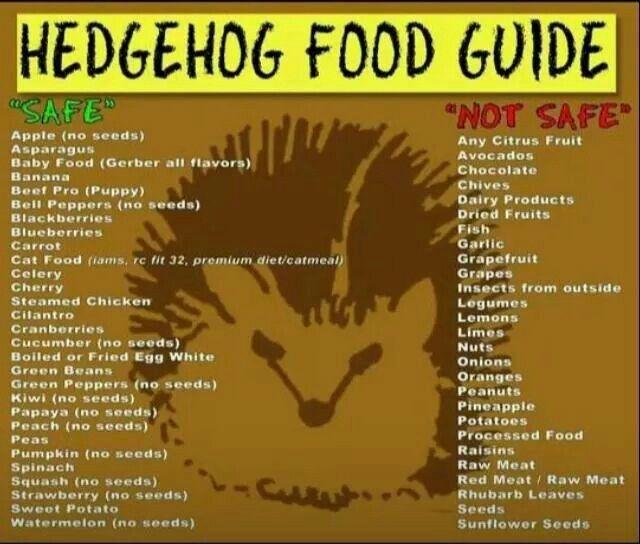 Hedgehog food guide