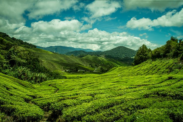 View into the mountain and valley in Cameron Highlands Malaysia