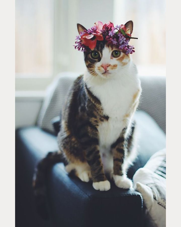 Cat with lilac wreath on her head ~ we ❤ this! moncheribridals.com