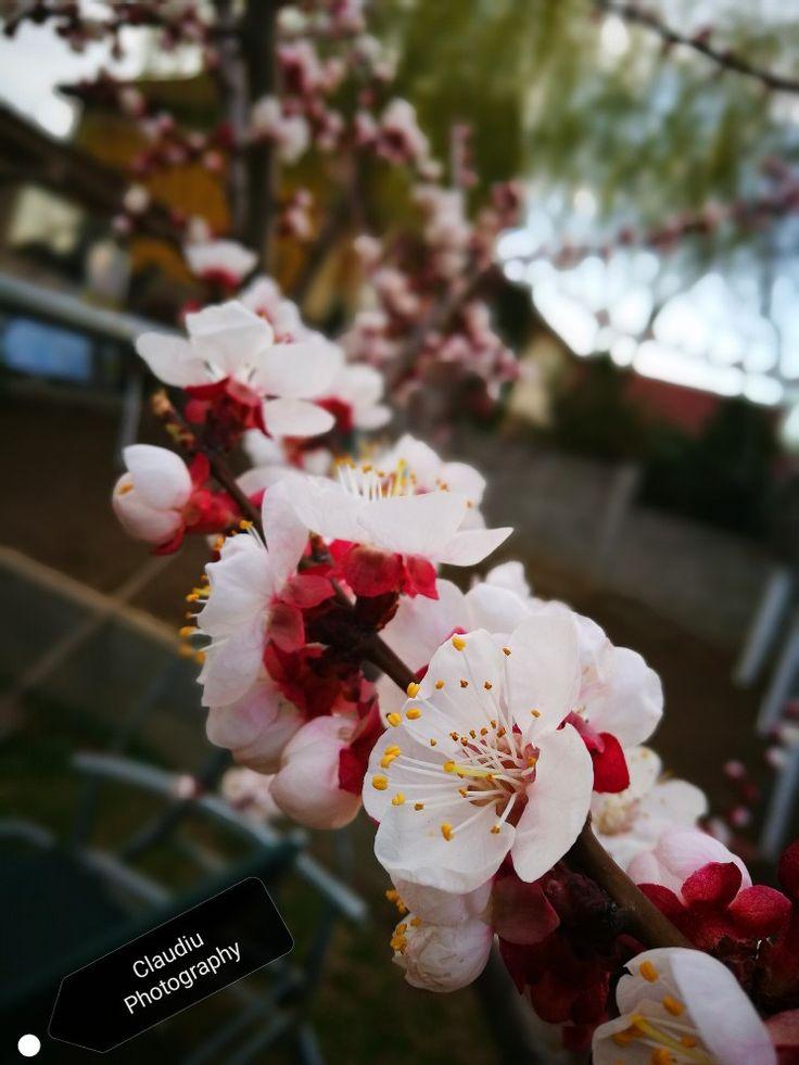Din nou primăvară