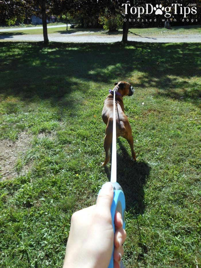 The Best Dog Leash Top Tips Dogdiybuzzfeed Beach All Dogs