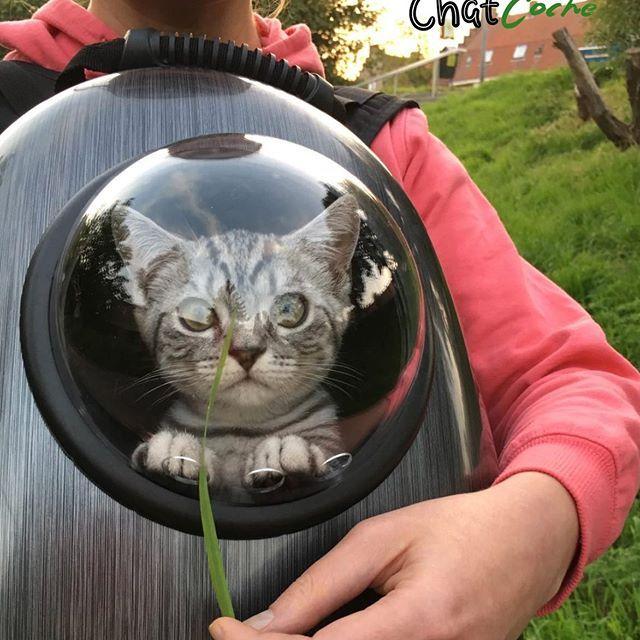 rencontres gratuites chat