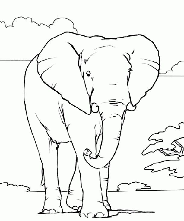 Realistic African Elephant Coloring Page Online Printable | Animal ...