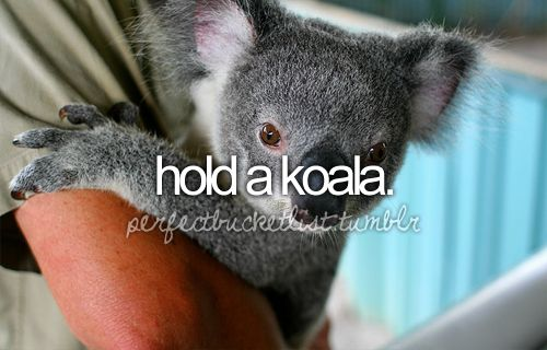 bucket list bucket-listBaby Koala, Bucketlist, Buckets Lists, Teddy Bears, Australia, Before I Die, Koalas Bears, Bucket Lists, Cutest Animal