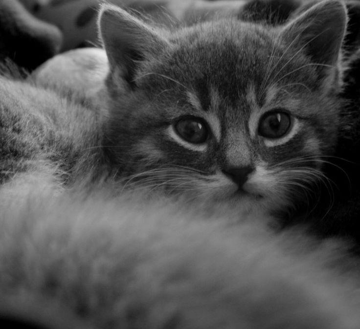 #beautiful#cute animals#cat#pandy