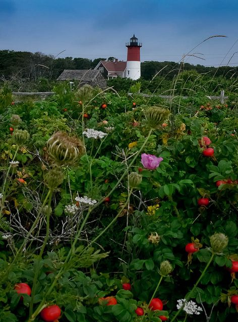 Nauset Light, Orleans MA
