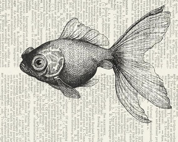 vintage goldfish II - gold fish printed on page from old dictionary via Etsy