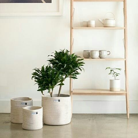 Mum would LOVE a set of these gorgeousScandinavianinspired Plant Me cotton cream and black with black stitch storage bins/baskets by NED Collections. Theyare perfect for any use. You canthrow a few pillows or blankets in them for storage or house your new little fiddle leaf fig or palm tree. And even better they can be used for all the loose kids' toys around thehouse! They are now 20% off. $16 for the small $24 - medium and $32 - large. . http://ift.tt/2q6SYfc . #sale #forkeepsstore…