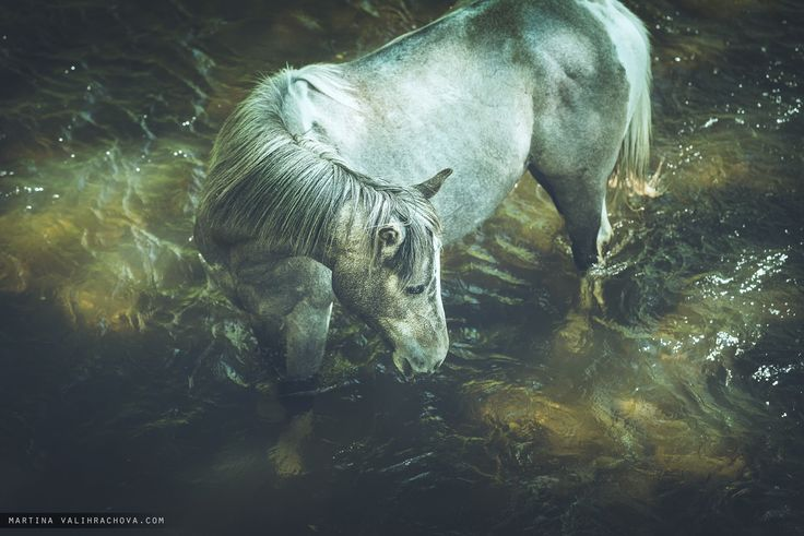 In the river - Pinto horse is cooling in small creek during a hot day.