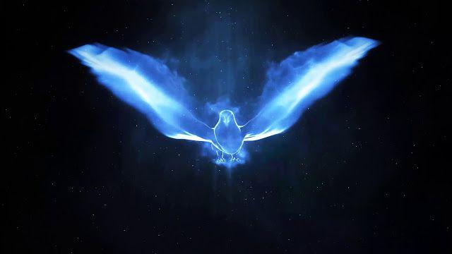 إليكم قالب أفتر إفكت إحترافي رائع يكشف شعار الطائر السحري Magic Bird جاهز للتحميل مجانا لكم مشاريع أفتر إف Bird Logo Design Bird Drawings Colorful Logo Design
