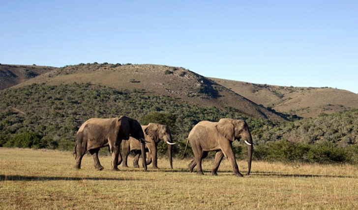 Luxury Holidays to South Africa