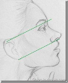 Sachez tout d'abord que le placement de l'oreille est primordial lorsqu'il s'agit de suggérer la posture du visage. Rappelez-vous que dans un portrait de profil, l'oreille se trouve entre le sourcil et la base du nez.