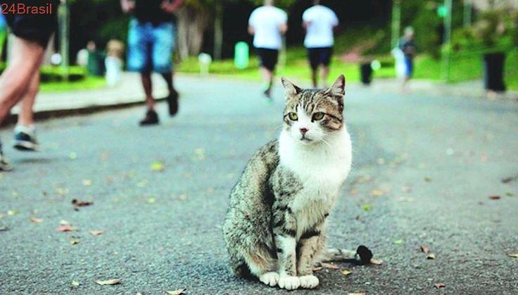 Abandonar gatos no Parque Municipal pode dar prisão em Belo Horizonte