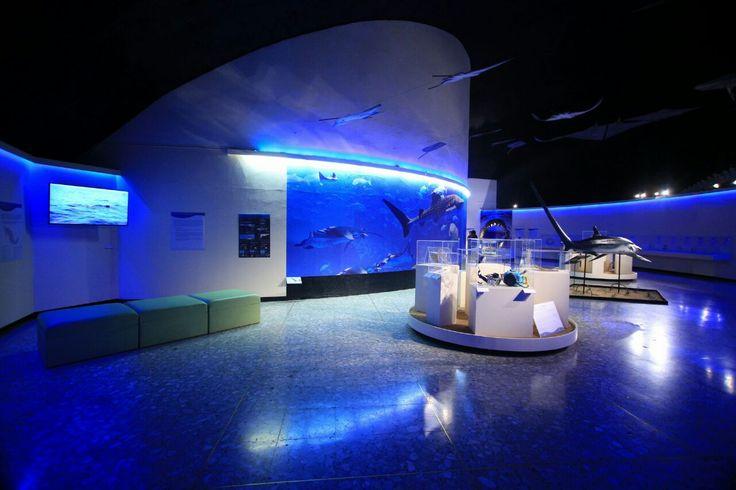 En el mundo existen alrededor de mil 200 especies, de las cuales hay casi 200 identificadas en México, como el tiburón blanco, martillo y sierra, así como la manta gigante, entre otros.