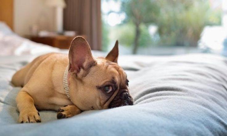 Απλοί τρόποι για να απαλλαγεί το σπίτι σας από τη μυρωδιά του σκύλου!