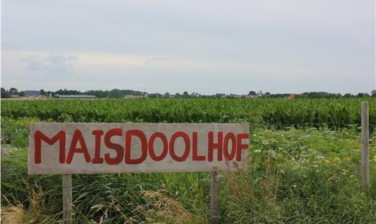 Het spannende maisdolhof daagt je uit tussen juni en september op FarmCamps Mariekerke