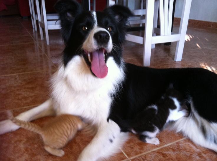 Criando gatitos