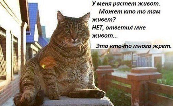 Открытка папе, картинка с котом и надписью жрешь