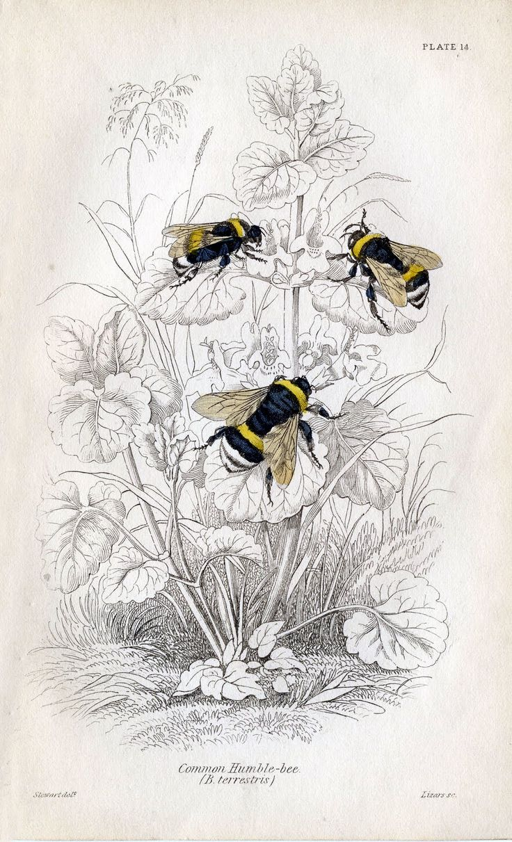 From Manuscripts About Bees And Beekeeping