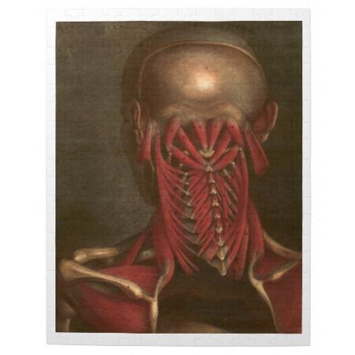Vintage Anatomy | Neck and Shoulders Jigsaw Puzzle