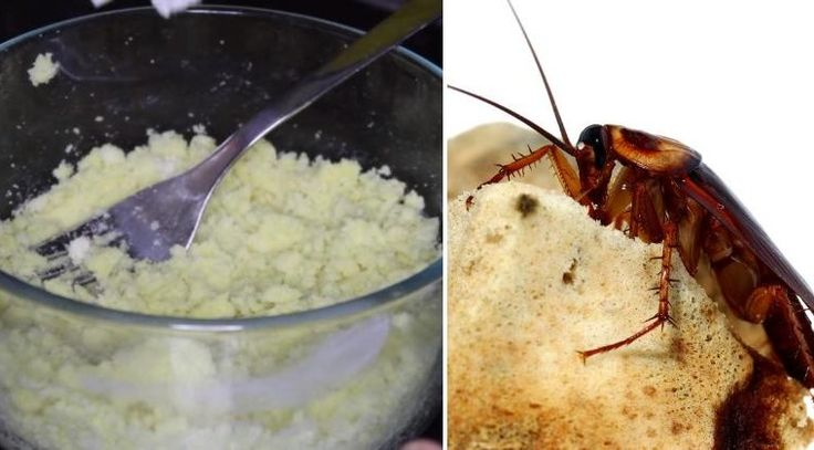Cockroaches are insects which are very disgusting and people don't like them, and will do everything to eliminate them. In addition you will see the recipe.