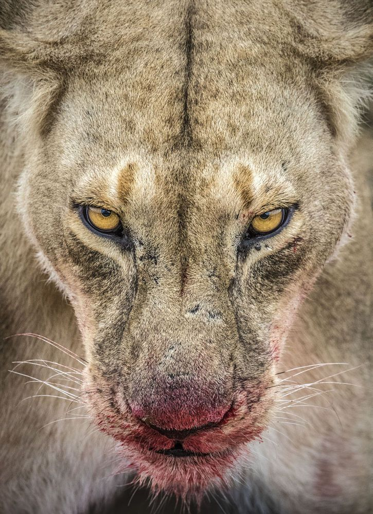 A View to a Kill by Ian Plant on 500px