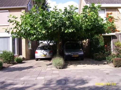 dakplataan voor boven extra oprit > geeft schaduw in zomer en vorstbescherming in winter