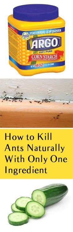 How to Kill Ants Naturally With Only One Ingredient.  This did not work for me.