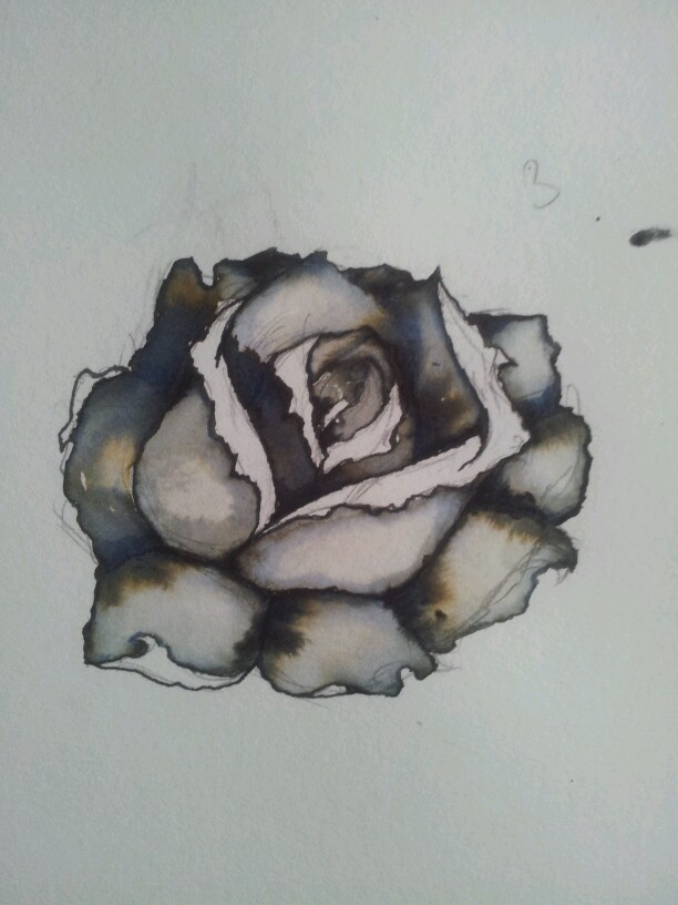 Rose by amelia jardine 2012