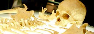 Bones on FOX