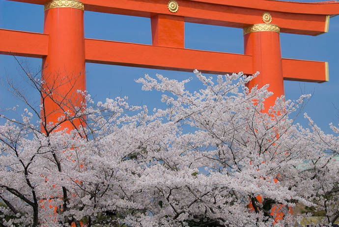 When Is Cherry Blossom Season In Kyoto?