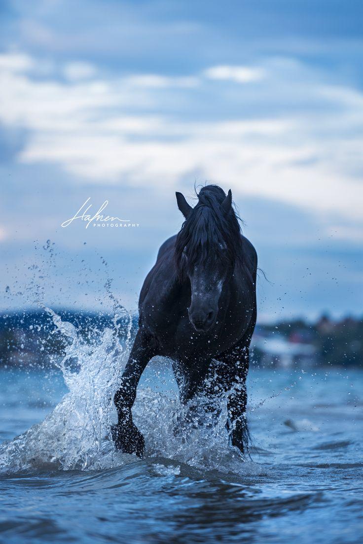 Friesen Hengst plantscht im Wasser | Rappe | Pferd | Bilder | Foto | Fotografie | Fotoshooting | Pferdefotografie | Pferdefotograf | Ideen | Inspirati…