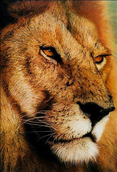 Animal Series - Ray Hare - Realistic painting #animals #art