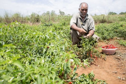The Swaziland Agricultural Development Programme is helping more than 20.000 farmers in Swaziland to move from subsistence agriculture to a more sustainable, profitable and market-led agriculture.
