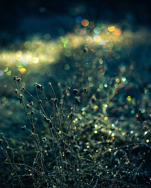 30 Breathtaking Examples of Bokeh Photography