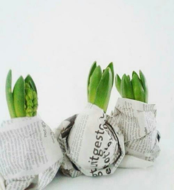 Groendecoratie: Gift Ideas, Green, Hyacinth Bulbs, Christmas, Gifts, Flowers, Garden, Diy, Spring