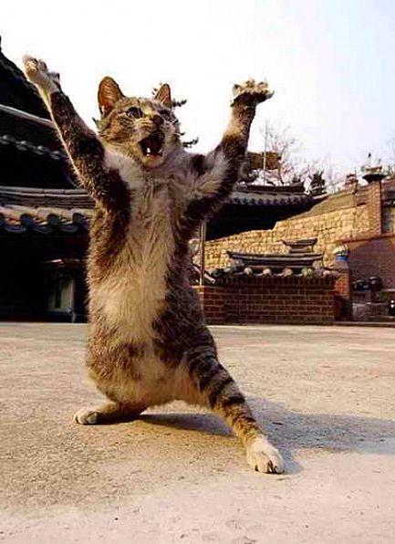 Kun Fu | Смешные фото кошек, Сумасшедшие кошки, Любители кошек