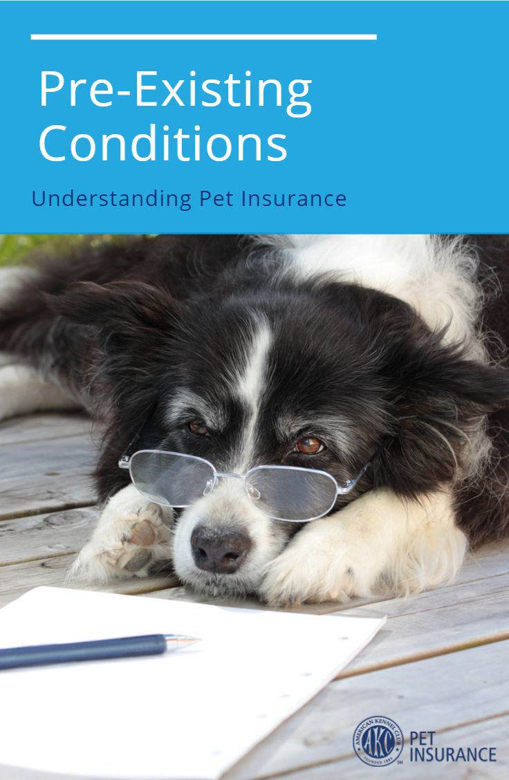 What Are Pre Existing Conditions Pet Insurance Pets Insurance