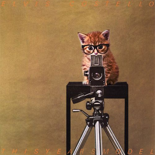 cheers!Album Covers, Hipster Cat, Kitty Cat, Cute Kitty, Elvis Costello, Silly Pictures, Covers Photos, Orange Kittens, Animal