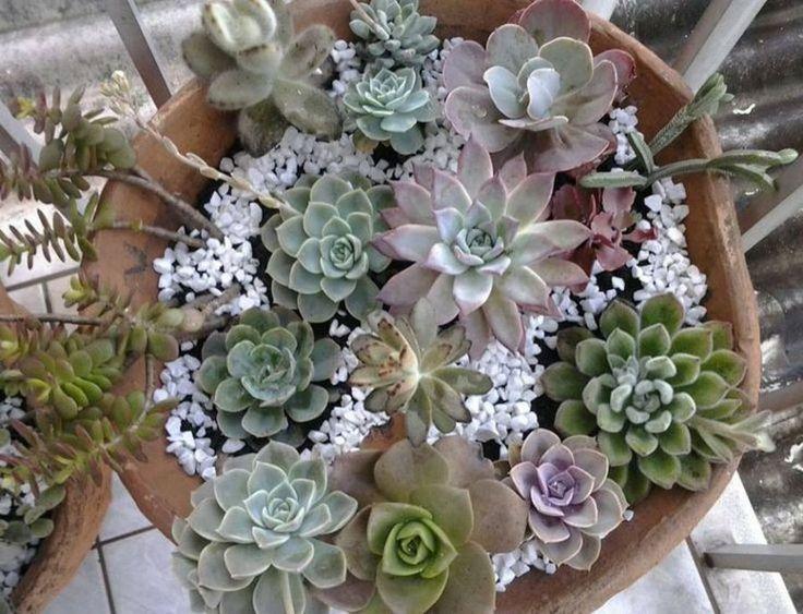 Fotos de flores de cactus y suculentas 1 infojardin for Infos jardin