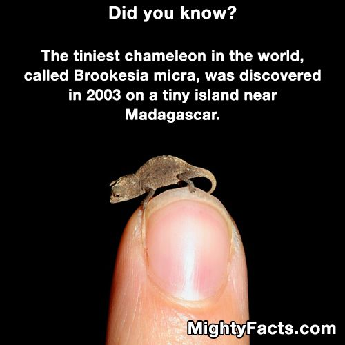 Best Mighty Facts Images On Pinterest Aquarium Cats And - 8 cool facts about madagascar