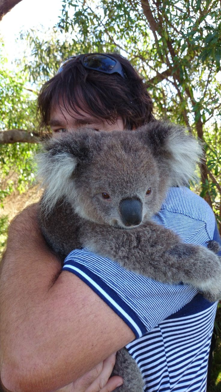 Koala Shows Up With A Surprise For The People Who Saved Her Life Years Ago