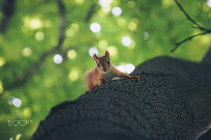 Looking down - It's cute small squirrel I met in the park. Squirrel was scared of me and climbed on the tree.