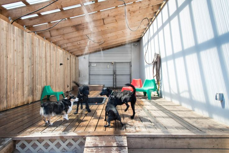Dog Boarding Kennels In Phoenix Az