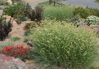Best 25 Xeriscape Plants Ideas On Pinterest Xeriscaping