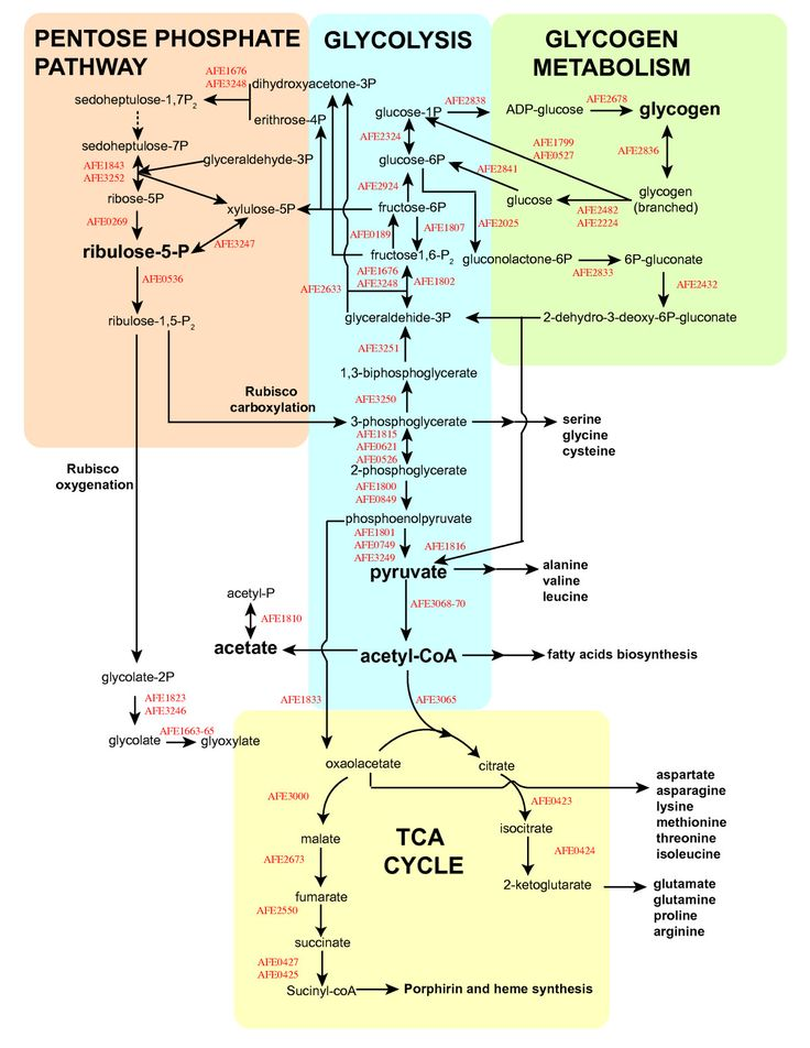 metabollic pathways (note the distinction between metabolic intermediates [the reactants and products of a metabolic pathway] and chemical intermediates [the short-lived species on the path from reactants to products in a single chemical reaction]) names of all enzymes.
