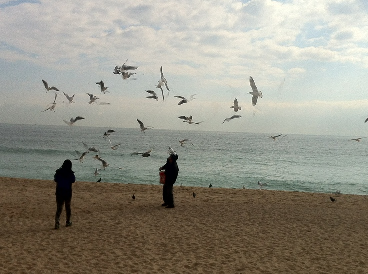 Persons in front of lots of flying seagulls