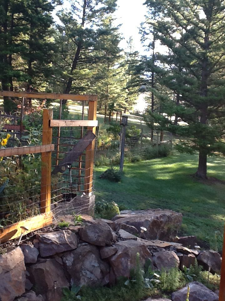 Our two gardens fenced to keep out bears and deer.